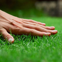 Lawn Care Mill Hill