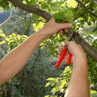 Tree Pruning Mill Hill